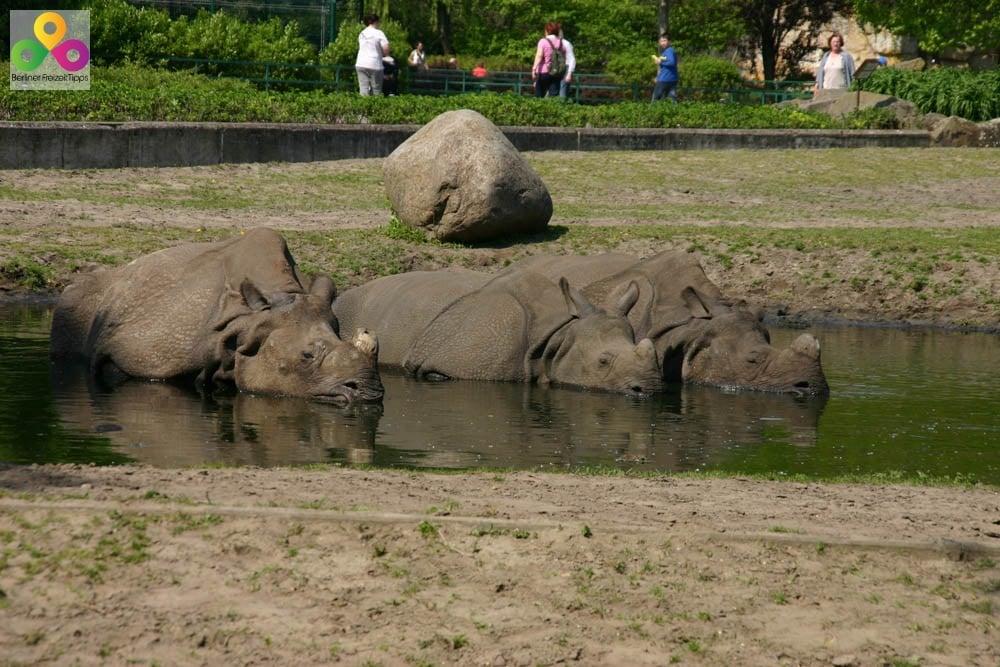 Bild Tierpark