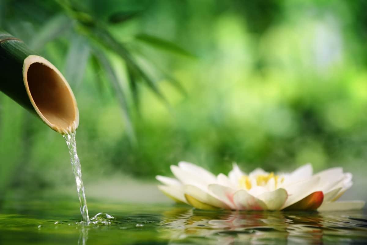 Massage Sauna Olivin Wellness Lounge Senefelder Platz