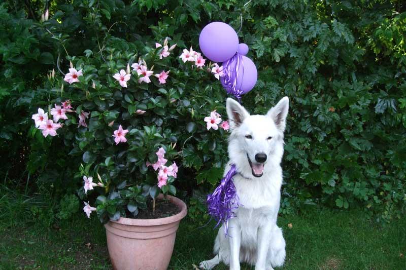 Bild-Kindergeburtstag-mit-Hund