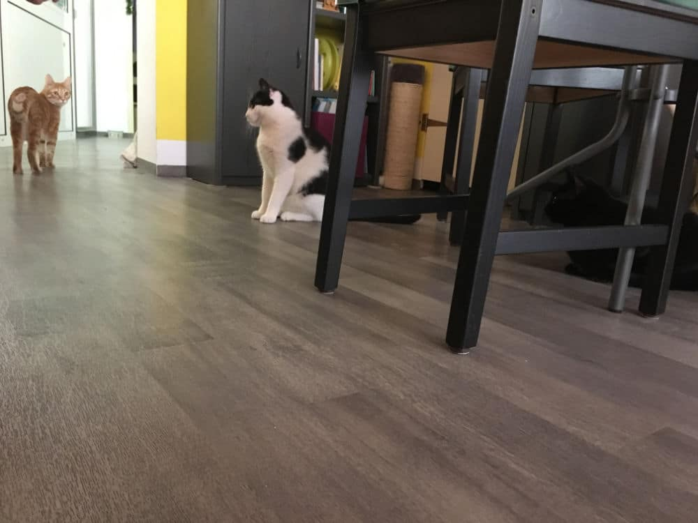Bild Katzen Katzencafe Charlottenburg