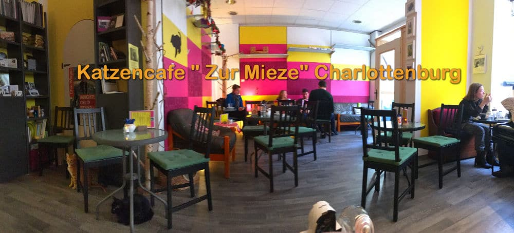 Katzencafe Zur Mieze in Charlottenburg