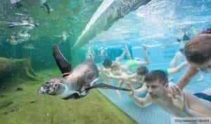 Therme & Erlebnisbad Spreewelten-Pinguine