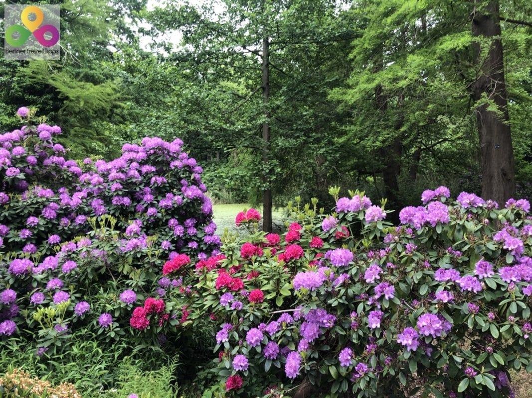 Rodedentron im Tiergarten