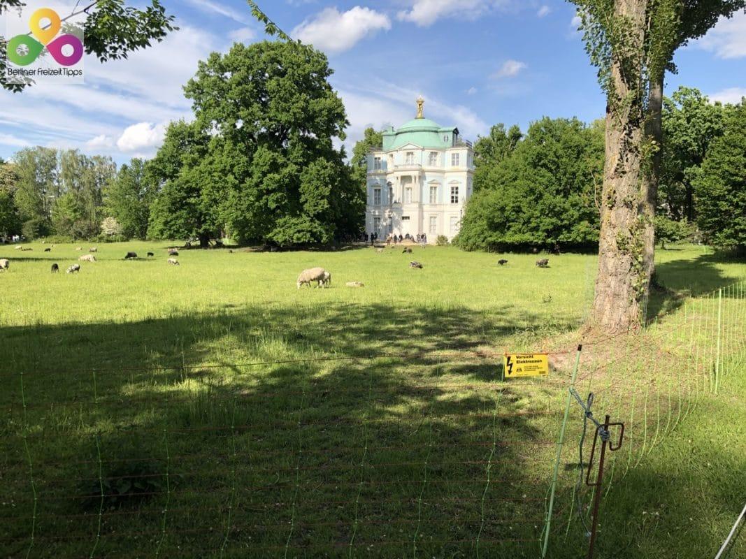 Bild Belvedare Schloss Charlottenburg