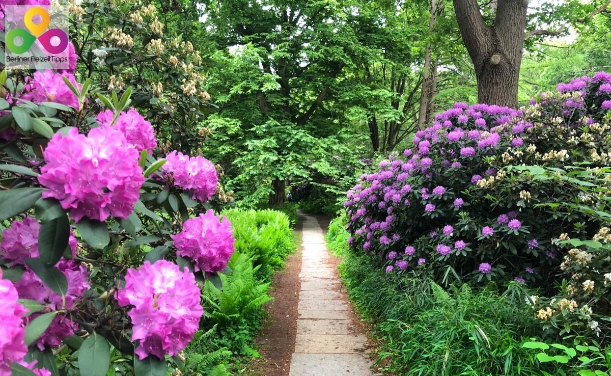 Spaziergang durch den Großen Tiergarten Park