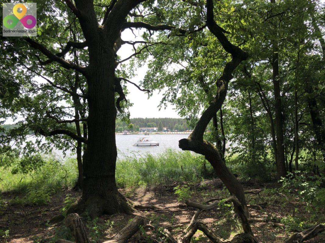 Bild Dahme Langer See
