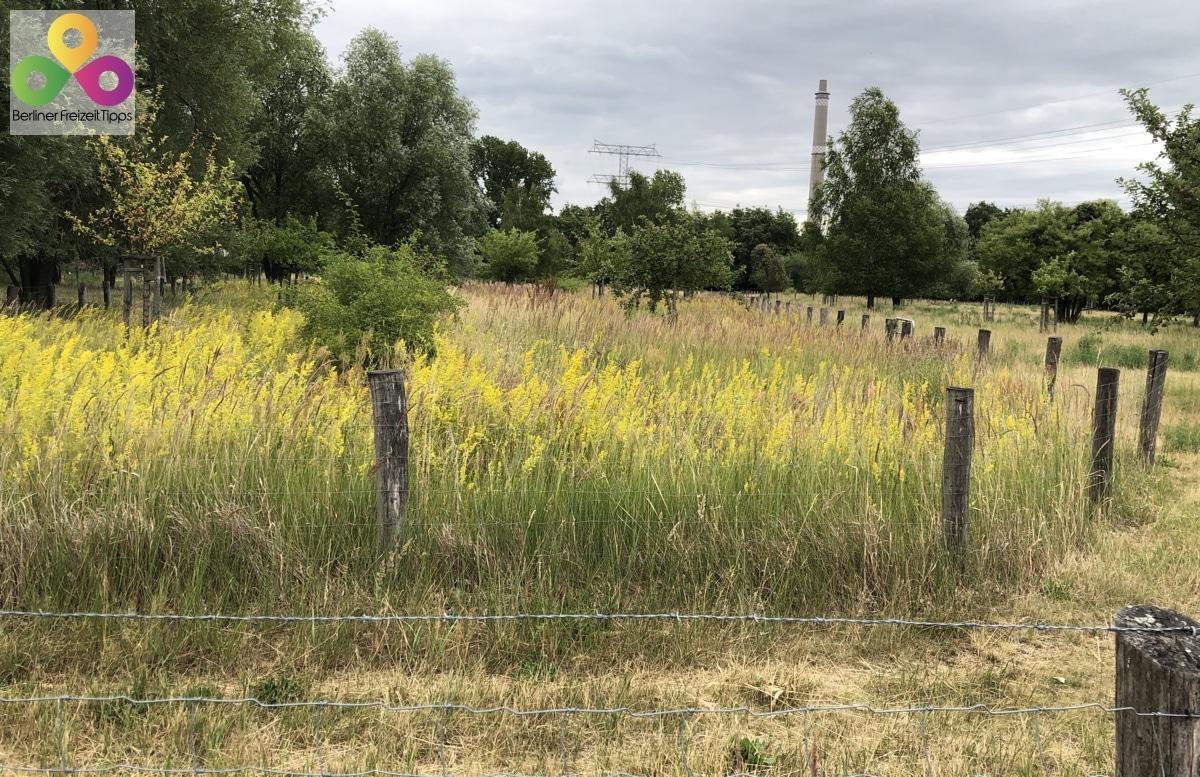 Bild Landschaftsschutzgebiet Herzberge