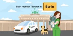 Bild mobiler Tierarzt Berlin