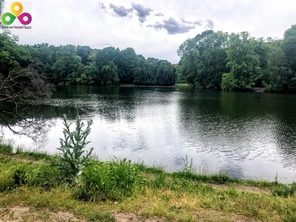 Foto Karpfenteich Treptower Park